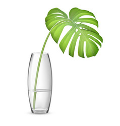 Leaf of monstera in vase vector