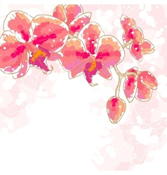 Branch of orchids on white background vector image