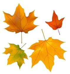 foliage plants leaves background maple maple leaf vector image