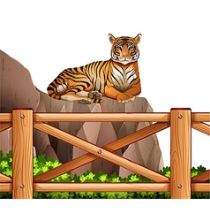 A tiger above the cliff vector