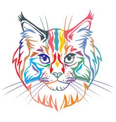 colorful decorative portrait of maine coon cat vector image