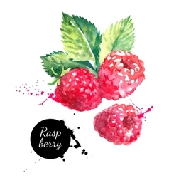 Hand drawn watercolor painting raspberry on white vector
