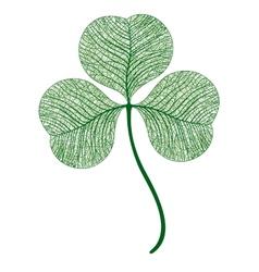 Leaf clover isolated Macro vector