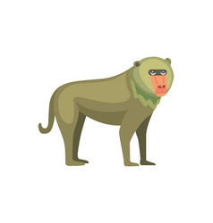 baboon monkey cartoon wildlife of vector image