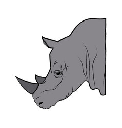 head rhino wild animal africa exotic mammal vector image