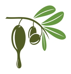 Olive5 vector image