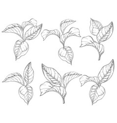 seamless pattern with forest leafs black vector image
