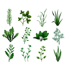 green grass icons set vector image