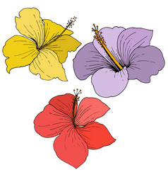 Hibiscus floral tropical flowers engraved vector