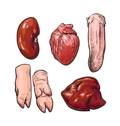 Isolated set of pig organs vector