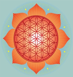 Sacred Geometry flower of life orange mandala vector image