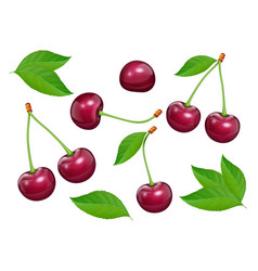 set of cherries with green vector image