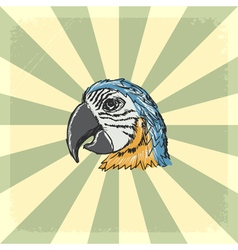 vintage grunge background with parrot vector image