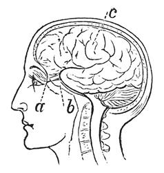 Optic Nerve vintage engraved vector image