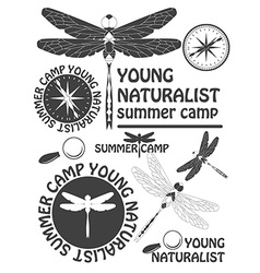 Set of vintage dragonfly labels badges and design vector