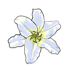 Single hand drawn white lily flower top view vector