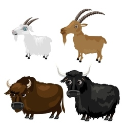 Two breeds goats and Buffalo on white background vector image vector image