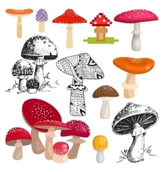 Bright different types of mushrooms vector image