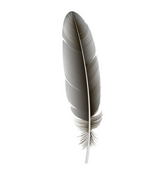 decorative feather icon realistic style vector image