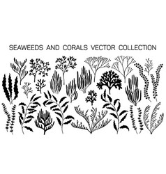 seaweeds and coral reef underwater plans vector image