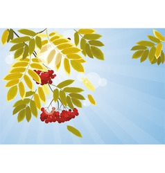 Autumn leaves of mountain ash 00 vector