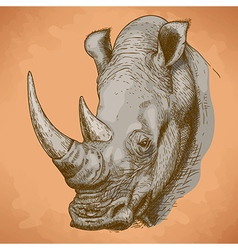 engraving rhino retro vector image