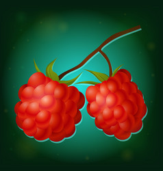 forest raspberry with leaves on branch vector image