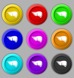 Liver icon sign symbol on nine round colourful vector image