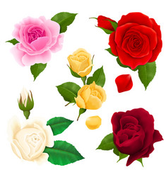 rose realistic set vector image vector image