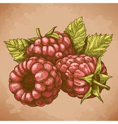 Engraving raspberry retro vector