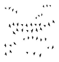 Birds on white background vector