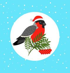 bullfinch bird with santa hat vector image