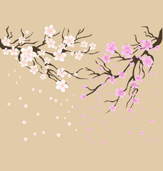 Cherry blossoms background vector