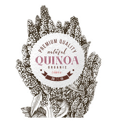 round emblem with hand drawn quinoa vector image