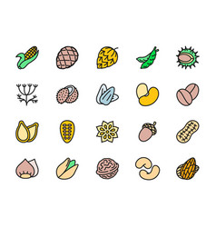 set nuts and seeds flat color icons corn cob vector image