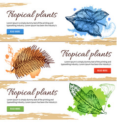 tropical plants hand drawn banners vector image