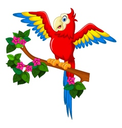 Cartoon red parrot on a branch for you design vector image