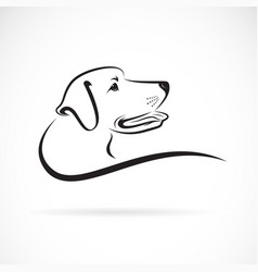 dog headlabrador on white background pet animals vector image