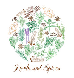 Herbs and natural spices sketch seasonings vector