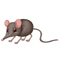 Little rat with gray fur vector