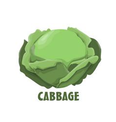 Logo cabbage farm design vector