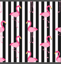 pattern with flamingo birds on the background with vector image