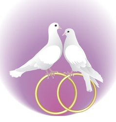 Two white pigeons and gold wedding rings vector