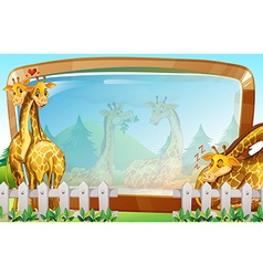 Frame template with giraffe in park vector image vector image