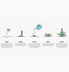 growing stages of plant vector image vector image