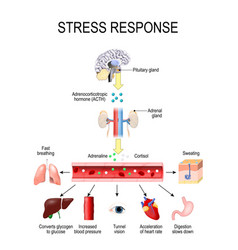 Activation of the stress system vector
