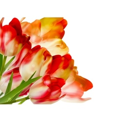 Bouquet spring red tulips on white EPS 10 vector image