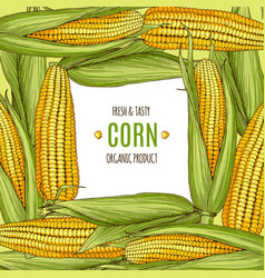 colored background with corn design vector image
