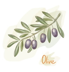 olives watercolor style vector image