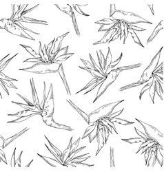 seamless pattern linear strelitzia collection vector image